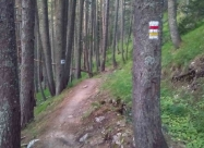 В гората преди хижа Яворов