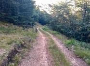 В гората преди заслон Смильо