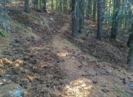 Отново в гората