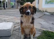 Кучето което ме гледаше докато ям баница