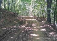 В гората след Букапреслапски проход