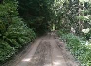 В гората след Обесения камък