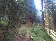 Отново в гора