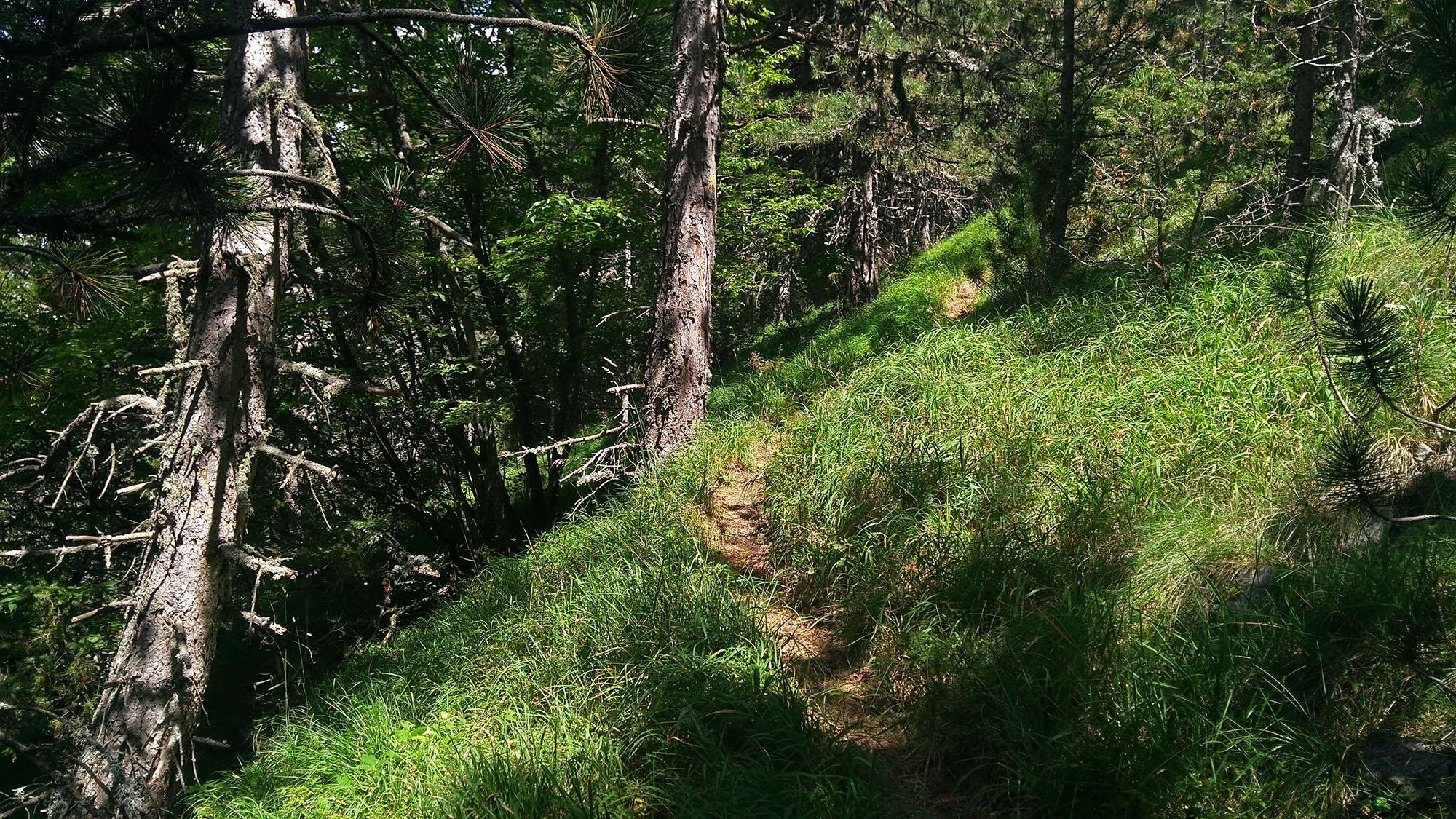В гората в посока хижа Извора