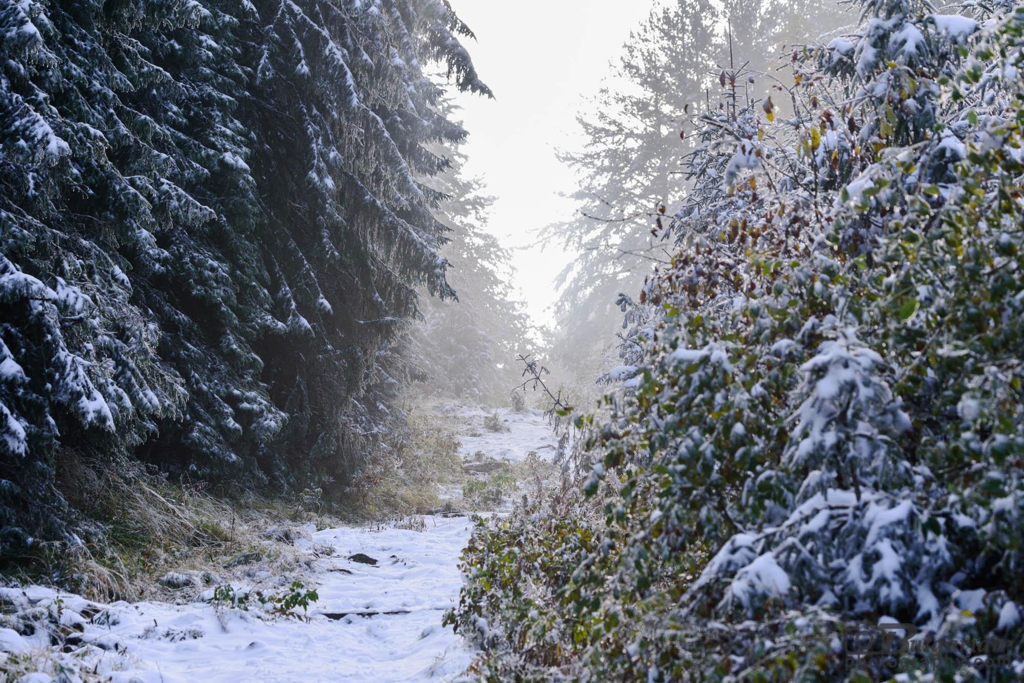 През гората