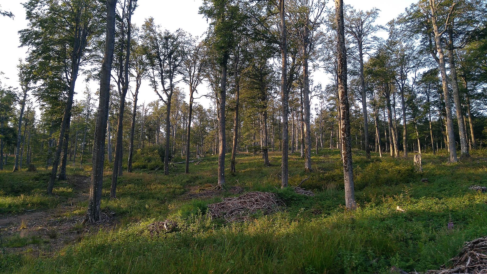 В гората след хижата