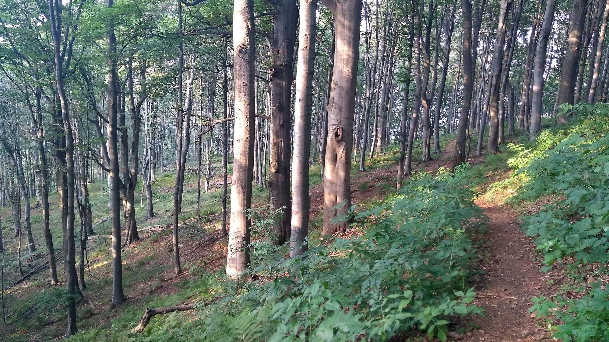 В гората преди ски база Грамадлива