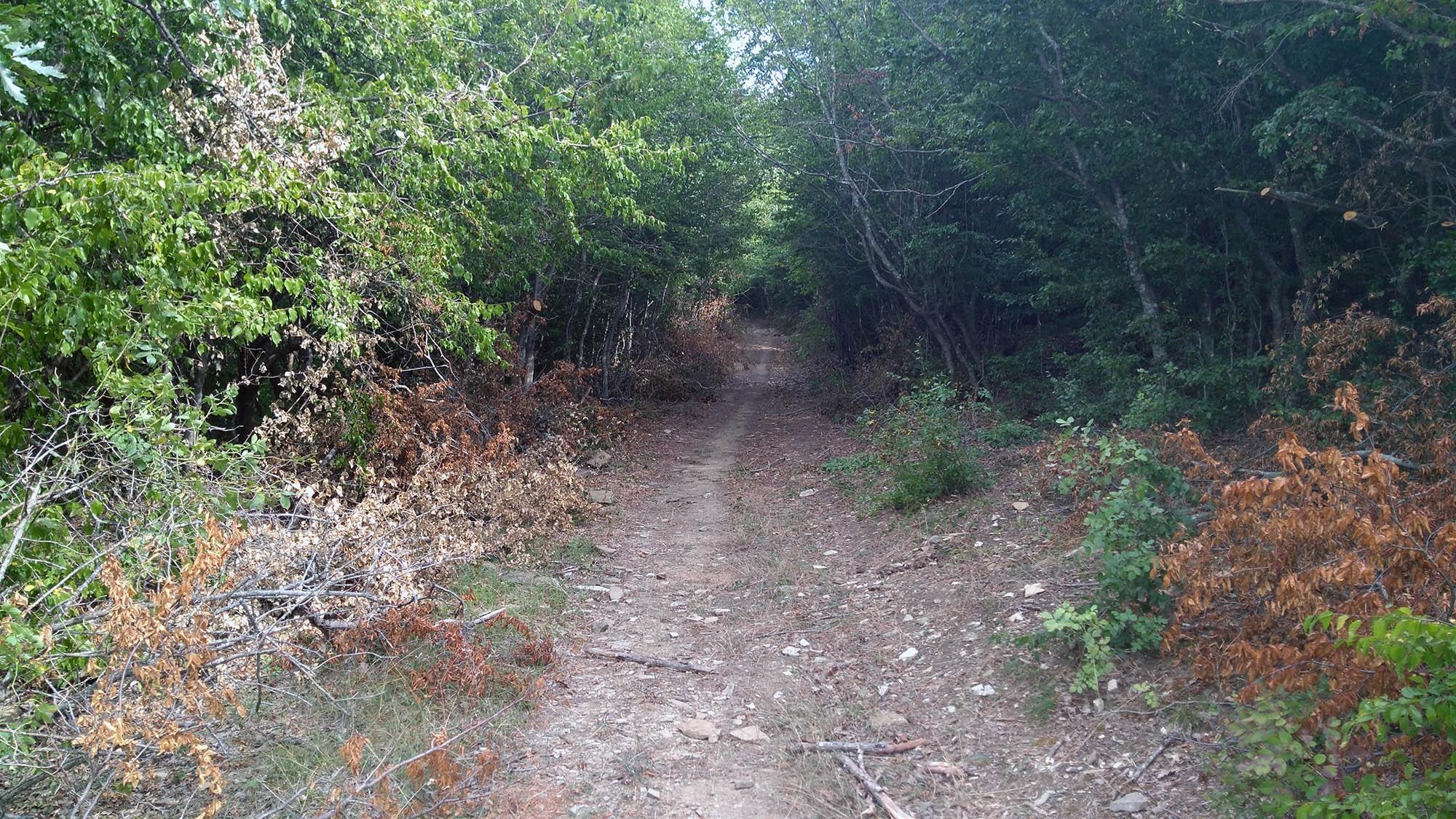 Полседната пътека преди Емона, която подсича от север
