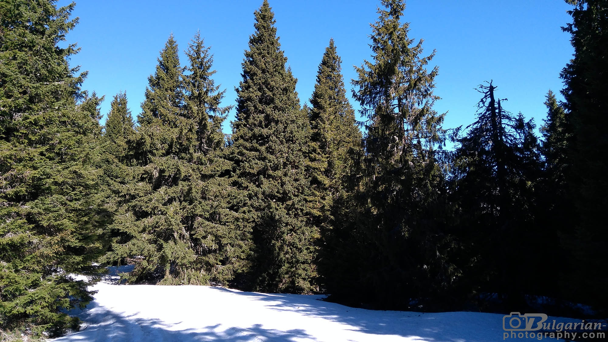 В гората към Добрила