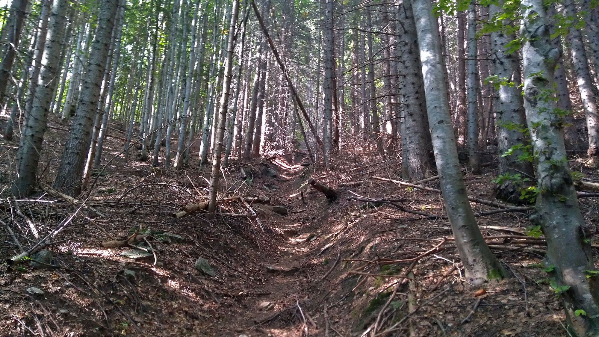 Стръмната пътека преди чешмата