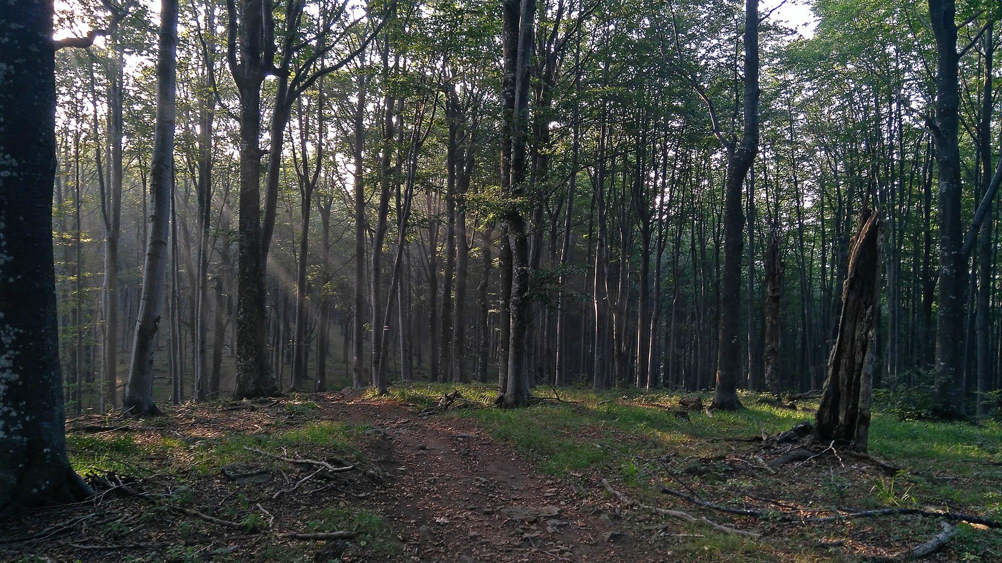 В гората преди сърната