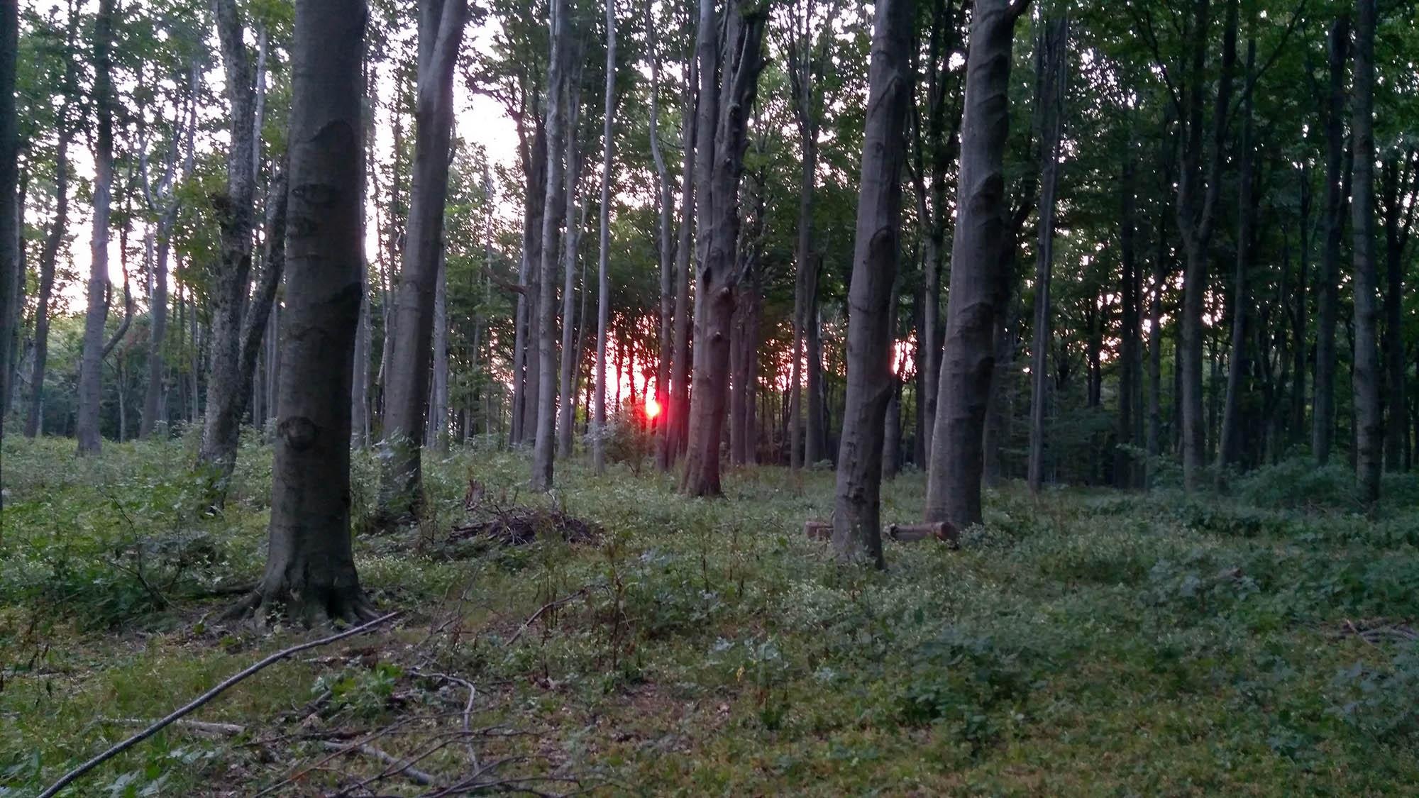 Изгрев между дърветата