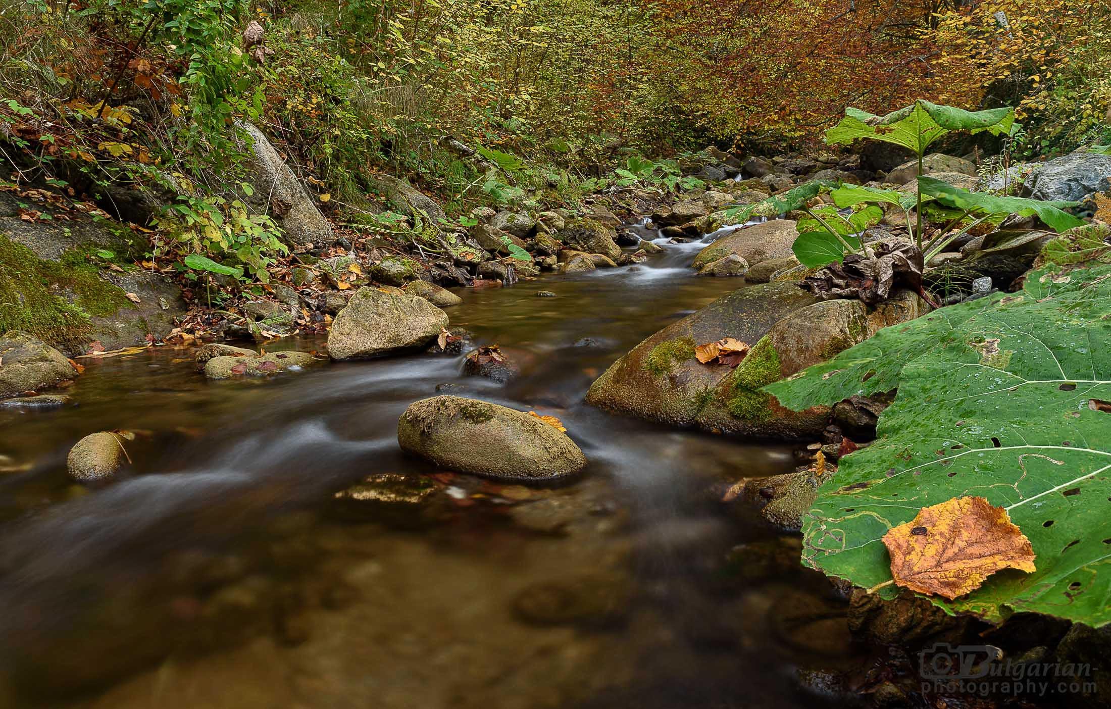 Една вълшебна есенна разходка