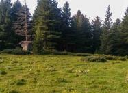 Поредната поляна