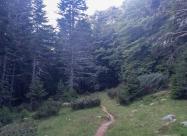 Гората след хижа Пирин