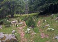 В гората преди хижа Пирин