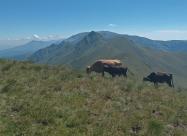 Около връх Малка Амбарица