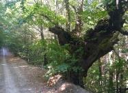 В гората преди разклона за село Рупча