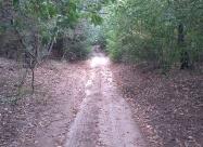 В гората преди Поморийски проход