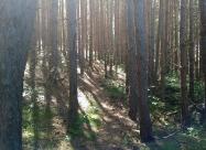 През гората след копривите