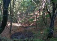 В гората след Букапреслапски проход. Този кален извор много ми заприлича на изворите на Камчия в Стара планина