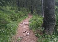 Пътеката след разклона за хижа Ловна