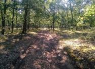 В гората между село Долно Сираково и язовир Тракиец