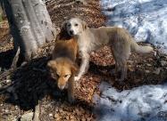 Двете кучета