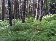 В гората след слизането от Капатник