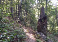 В гората под връх Бутурски чукар