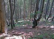 В гората под връх Издермец