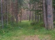 В последната гора на южен Пирин