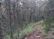 Гората преди Шилигарника