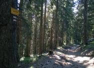 В иглолистната гора преди хижа Добрила