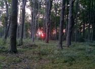 Изгрева между дърветата. Приказно изживяване