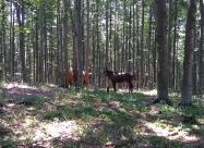 Коне в гората