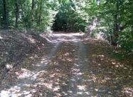По пътя към село Добра поляна. Листата бяха нападали все едно е есен