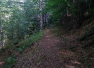 В гората към хижа Яворов