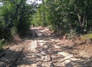 Малко преди края на гората преди Емона