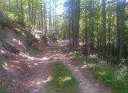 В гората към Славянка