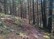 В гората към хижа Попови Ливади
