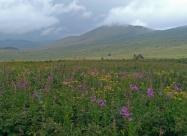 След като хванах пътеката за Петрохан видях, че връх Ком вече се беше скрил в облаците