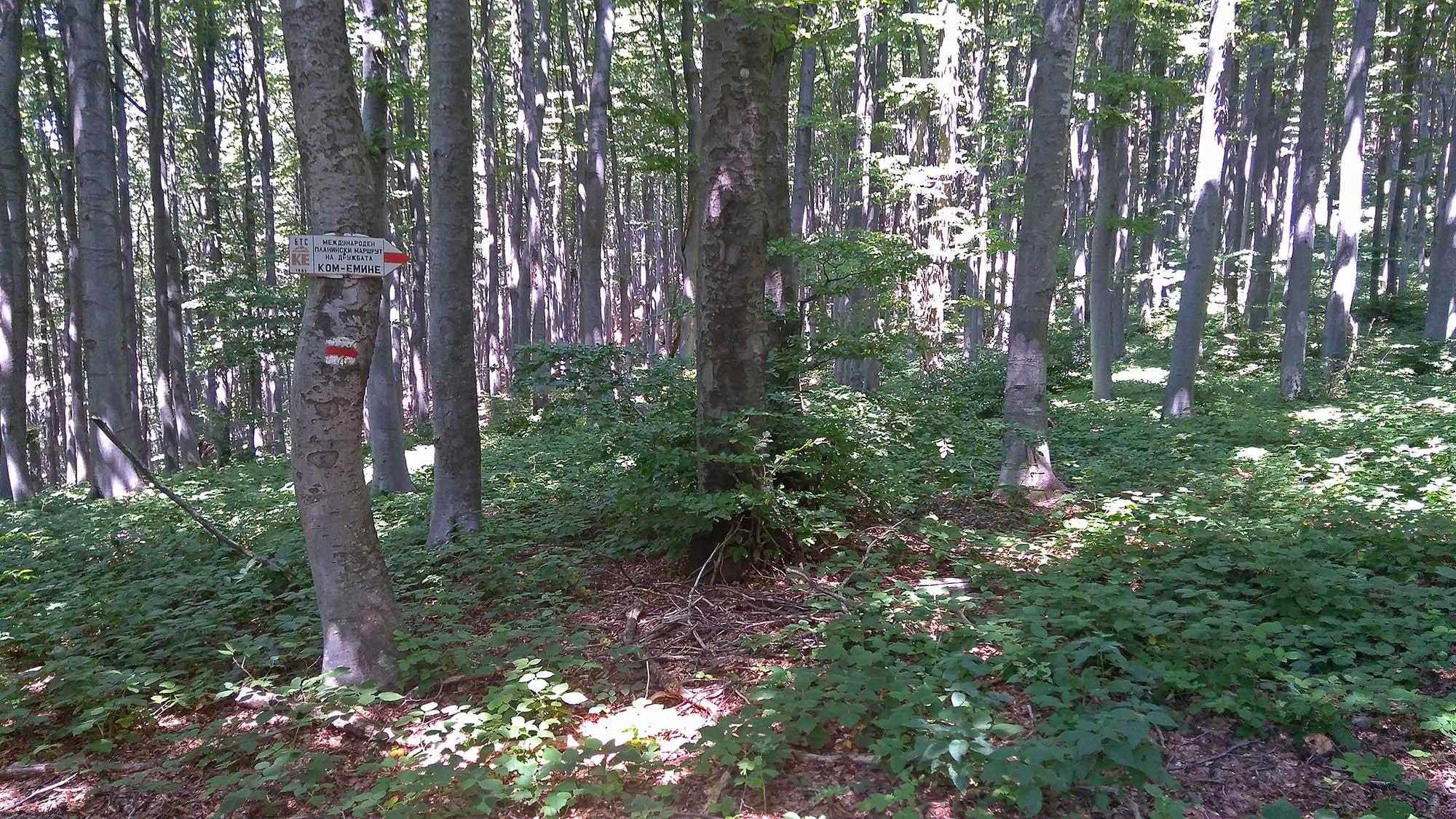 В гората към Бузлуджа