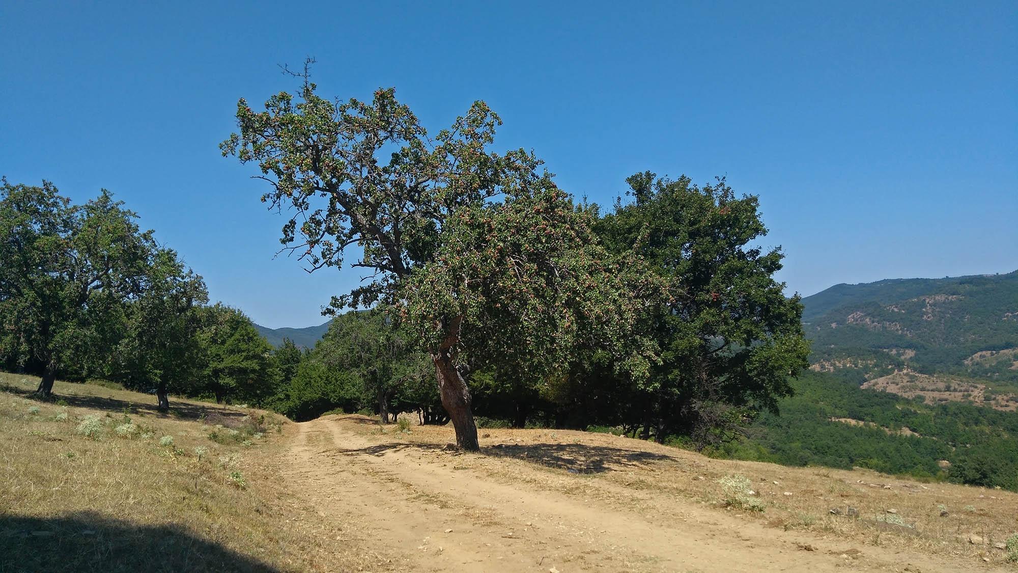 Преди село Рупча