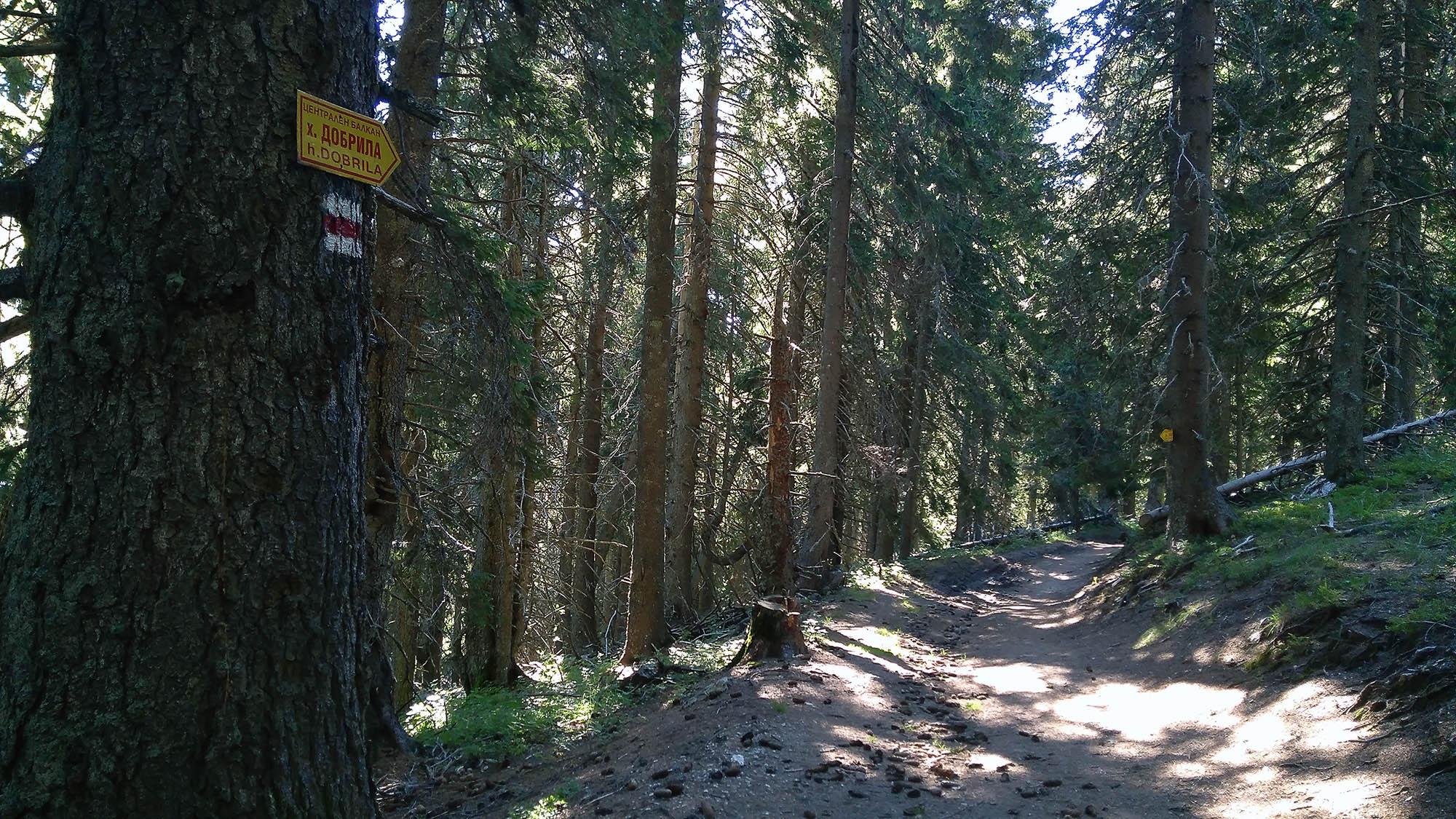 В гората преди Добрила