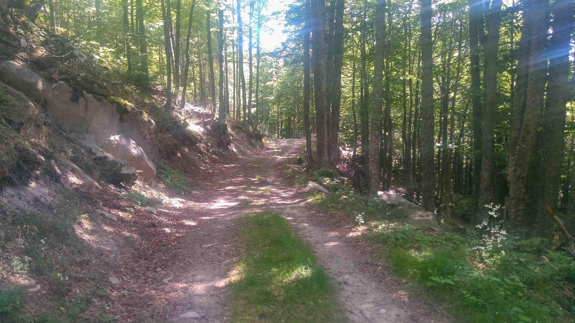 В гората след горна млашка ливада